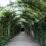 Tunnel im Mirabell Garten
